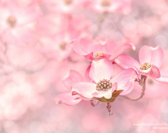 Spring Flowers Pink Cherry Blossom -Wall Art -Home Decor Children's Nursery Print -Fine Art Print