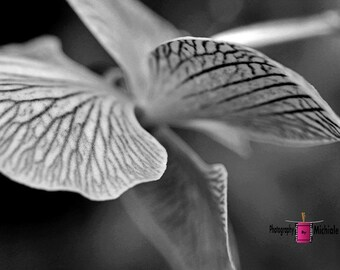 A Different Perspective of an Orchid (FREE SHIPPING in the U.S.) - customized card, print or canvas