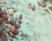 Fine Art Photography Digital Download Autumn Red Berries Bokeh Blackberries Seasonal Winter Surreal Printable Art Photo Photograph
