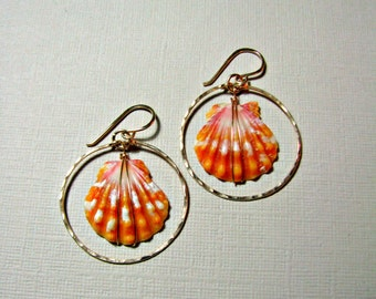 Sunrise Shell Hoops, Hawaii Seashell Earrings, Hammered Gold Hoops, Hawaii Shell Hoops, Beachy Earrings, Beach Wedding, Rare Hawaiian Shell