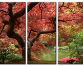 Framed Huge 3 Panel Maple Tree Giclee Canvas Print - Ready to Hang
