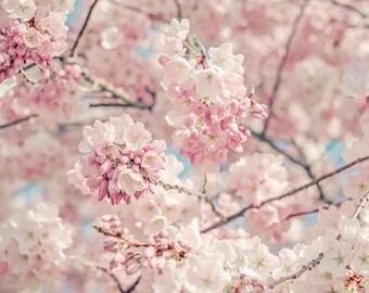 "Flower Photograph, Cherry Blossoms, Fine Art Photography Print, Flowers, Pastel Pink, White, Nursery Wall Art, ""Cherry Blossoms"""