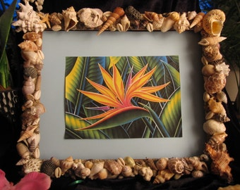 "Hawaiian Sea ShellArt  Picture frame with a Print in Vivid watercolor of ""Hawaiian Bird of Paradise."""