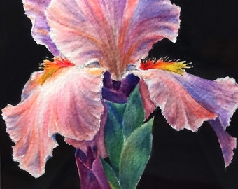 Iris in Pink an original watercolor painting or Giclee print from original, also available as greeting/note/gift cards