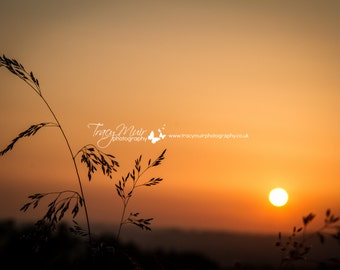 Nature Photography - Grasses in Sunset - wall art - home decor - fine art photography - Choose Size
