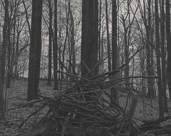 Dark Photography - Woodland Photography Fine Art Nature Print Black Metal Trees Black and White Art Grey Shadow Decay : 16x20 Print 8x10 4x6