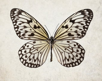 Neutral Spotted Butterfly Print - minimal wings photograph collector fine art - Queen of the Sky
