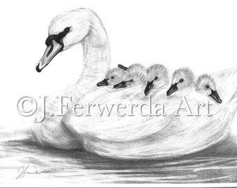 Pencil Drawing Print - Seven Swans A Swimming - Day 349