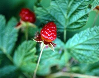 16 Organic Red Raspberry Leaf Tea Bags BEST SELLER