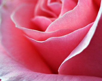 Pink Rose Photograph, Flower Photography, Botanical Square Wall Art, Feminine Nature Decor, Fine Art Photography, Pink Floral Photo Print