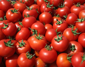 Greek tomatoes seeds,64, heirloom seeds, sweet tomato, gardening , greek seeds, non gmo