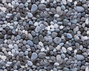 Landscape Scenes: Pinecones, Pebbles, Rocks, & Birch Trees! [Choose Your Cut Size]