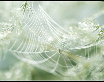 Spider web in dew - Photographic Fine Art Print