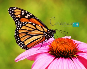 Butterfly on Flower - Nature Fine Art Photography