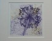 SALE Allium Seedhead - An original Collograph Print