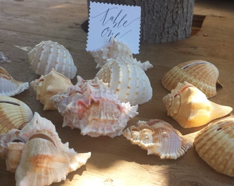 Shell Card Holders/beach wedding/all occassions/beach decor/table numbers/place card holders/shell card holders/wholesale shells