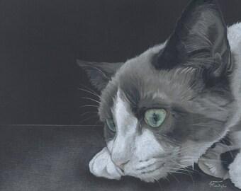 Portrait Print of Grey Cat
