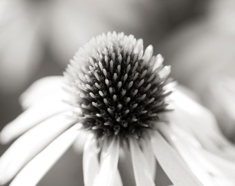Black and White Echinacea flower fine art print,  modern, abstract, macro.