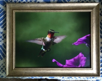 9 By 12 Humminbird photograph printed on canvas