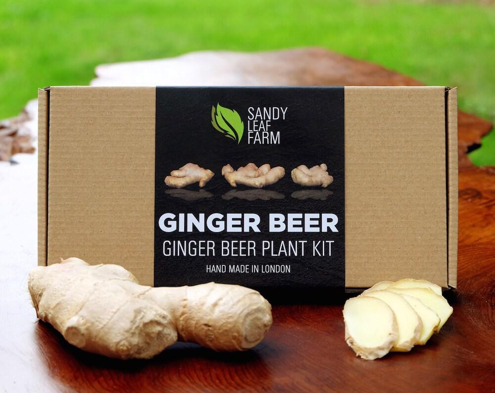 Spicy Ginger Beer Plant Kit by SandyLeafFarm on Etsy