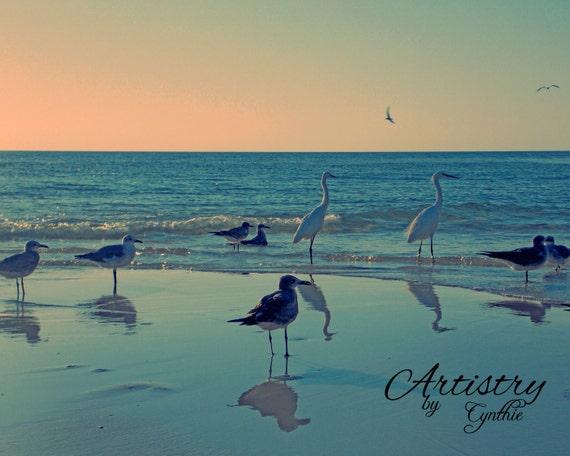 Beach Birds Florida Florida Birds,beach Birds