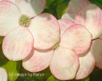 Spring Flower, Pink Flower Photography, Fine Art Photography - Dogwood