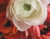 Three Ranunculuses, nature photography, white, orange, and pink flowers, fine art photograph, spring decor