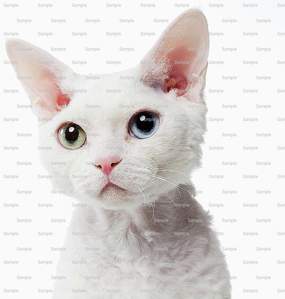 Cat - Devon Rex - Edible Cake and Cupcake Topper For Birthday's and Parties! - D6450