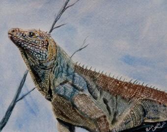 Blue Iguana Original Watercolor Reptile Art Lizard Painting