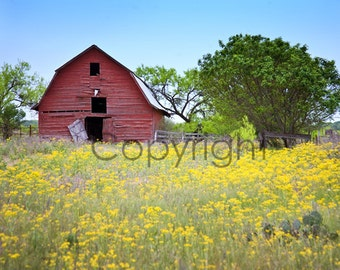 Red Barn Art Print, Texas Hill Country Spring Wildflowers signed 5x7 8x10 11x14 yellow red wall home office decor