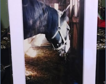 Stabled Horse Photograph (2004)