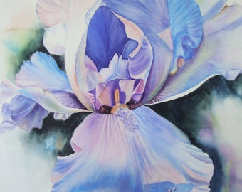 Watercolor Painting Original Limited Edition Giclee Print Iris Flower Art Iris by Diana M Turner, 11 x 14