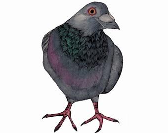 Fat Pigeon Print