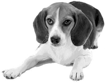 Cool Beagle Dog Pop Art Paint By Numbers Kit