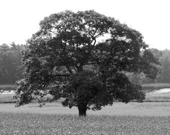 shubie tree 4 seasons -  photo set