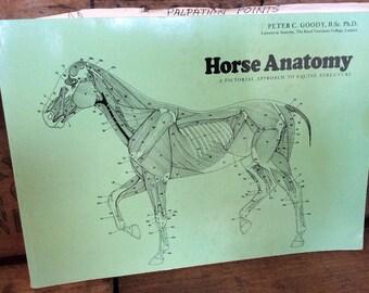 equine dissertations