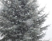 pine in snow digital download