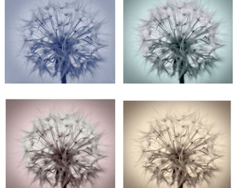 Set of Four Colored Dandelions