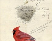 11 Cardinal Nest Egg Card Vintage French Paper Background