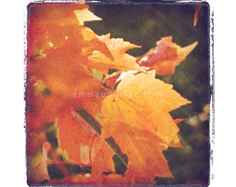 Vintage look photography: soft orange glowing leaves. Zen art, nature, textured, shabby chic cottage decor, gently aged look.