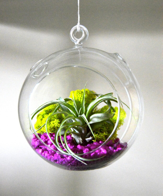 hanging glass terrarium air plant terrarium by tierrasolstudio. Black Bedroom Furniture Sets. Home Design Ideas