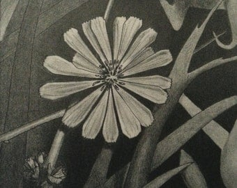 Flower Time Original Print Pencil Drawing