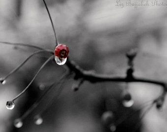 Cherry Tree Black and White Nature Photo Print