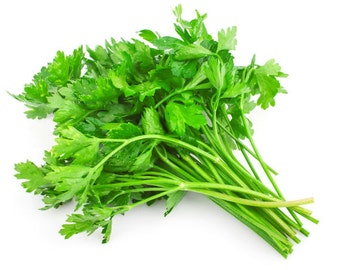 Parsley Italiano Herb seeds 5gr 2000-2200