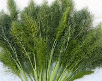 Wild fennel herb seeds 4.00gr  1000 - 1100 seeds