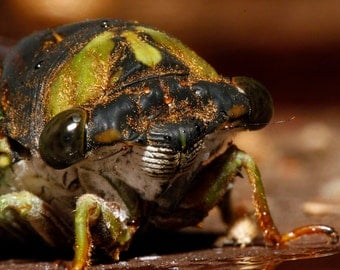 cicada mug (faces 1)