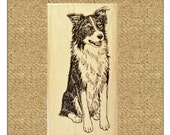 Border Collie Sitting Up Rubber Stamp #451