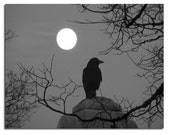 Night Nature Crow Photograph, Monochrome Print, Blackbird And Full Moon, Raven, Surreal, Celestial Bird, Gray - Night Bird