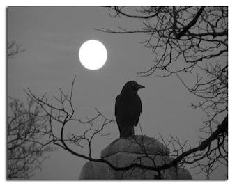 Night Nature Crow Photograph, Monochrome Print, Blackbird And Full Moon, Raven, Surreal, Celestial Bird, Gray - Night Bird