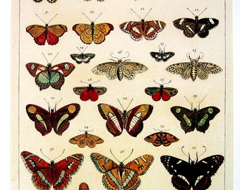 Butterflies of South America - 2 Sided Seba Book Print - Large 13 x 9